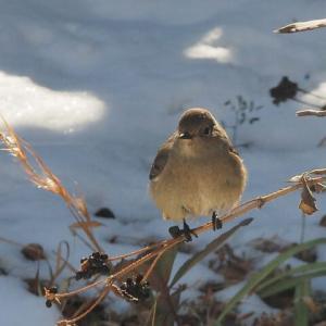 野鳥の観察