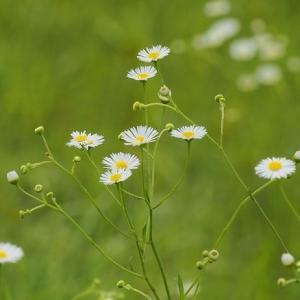 梅雨の野の花Ⅱ