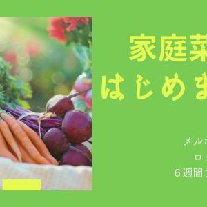 【家庭菜園】メルボルン6週間ロックダウンを子供達と乗り越える!