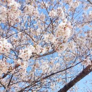 春を感じる♪可愛いお花たち