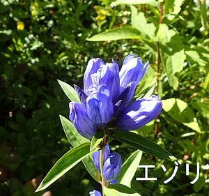 花の入笠山①