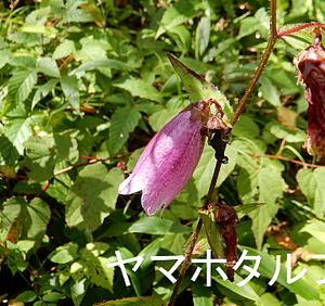 花の入笠山④