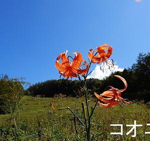 花の入笠山②