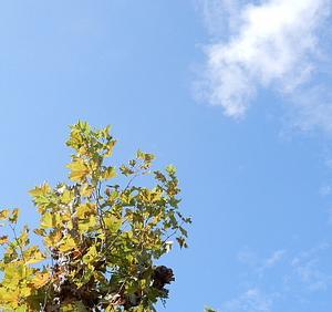 秋空の散歩道