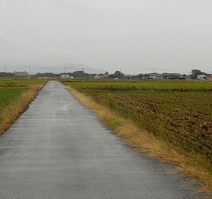 小雨の散歩道