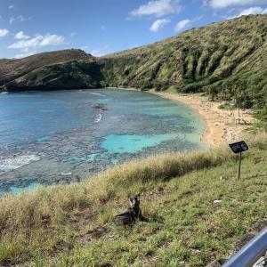 2019 ハワイ旅行⑥ 3日目 ハナウマ湾