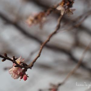 春の訪れ**