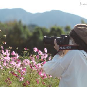 秋のお花畑❁⃘*.゚