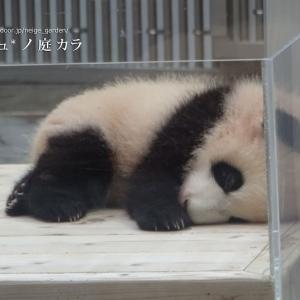 夜行バスを使えば和歌山の赤ちゃんパンダに気軽に会える!+世界遺産観光も!