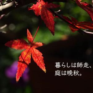 【庭カラ】晩秋な庭と実り。ガーデナーのつぶやき。