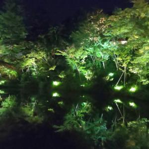 【京都】高台寺夜間特別拝観②