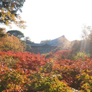 【京都】11月二回目の京都旅  ~東福寺~