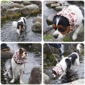 夏のはじめの川遊び@兵庫島公園