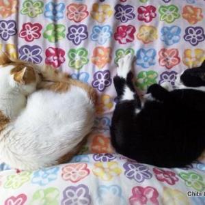 猫人生のはじまりは…