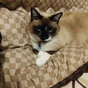 ライちゃん、コタツの袖でゆっくり寝ていてね