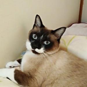 ライちゃん、布団の上で寝る。暖かいのね