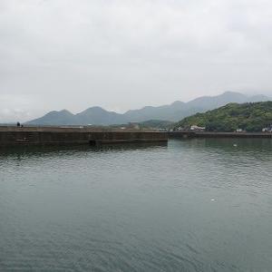 波津の漁港へのキス釣りと、庭の花