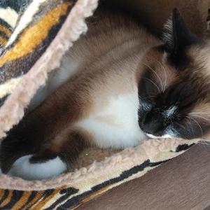 暑いのに、サンルームの穴倉ベッドに寝るライ