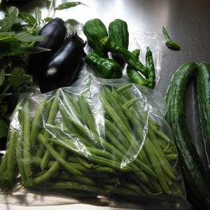 梅雨の晴れ間と野菜の収穫