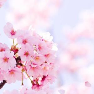【冬のうつ症状を予防する効果あり?】花を飾る、その知られざるメリットとは?