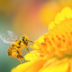 【睡眠不足はアトピーや花粉症の原因?】自律神経の乱れからくる、多くのデメリットとは?