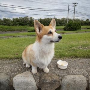 犬洗い1匹100円