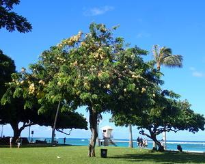 ハワイの賃貸物件、詐欺広告の見分け方