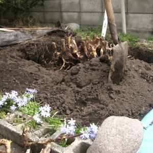はじめての家庭菜園…