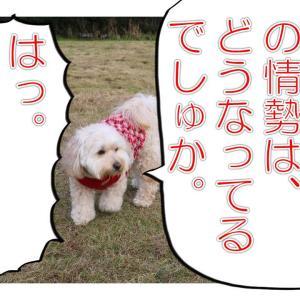 ワン☆ワンピース(50)