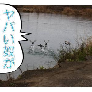 スター・ウオーズ 福ちゃんの夜明け!の巻
