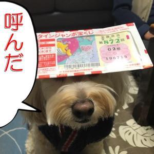 バレンタインジャンボ宝くじ開封~!の巻