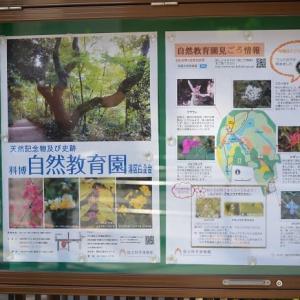 自然教育園にマヤランとツリフネソウを見に行きます 1