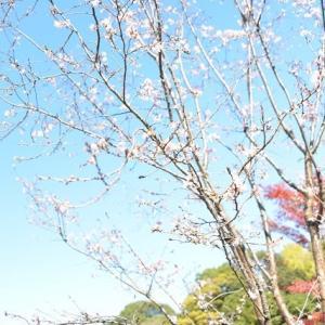 皇居坂下門から富士見櫓の下を並んで進みます 4