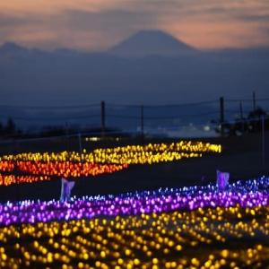 マザー牧場 イルミネーションの彼方に富士山 6