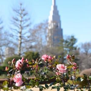 新宿御苑 整形式庭園バラとドコモビル 6