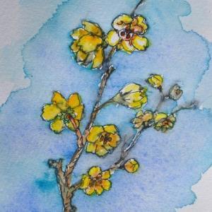 家で咲く春を呼ぶ花 ロウバイの絵 97