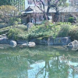 目白庭園は池と石組みの日本庭園 14