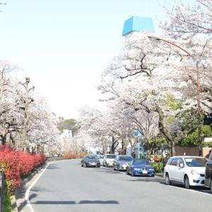 播磨坂桜並木ロード帰りも歩きました 3