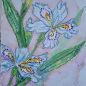 シャガの花 絵 2-23