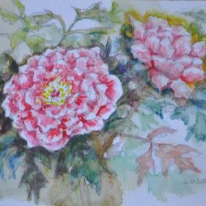 春牡丹の花 絵 2-24
