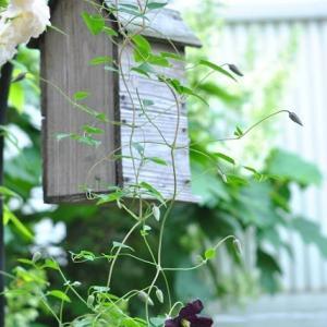 庭の花 巣箱とテッセンの情景  2-86