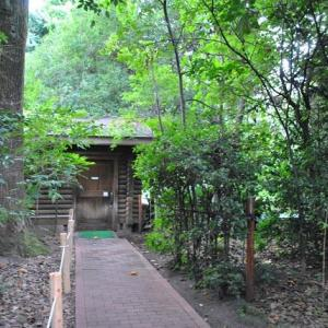 早朝の散歩で池袋の森公園のヒガンバナ 37