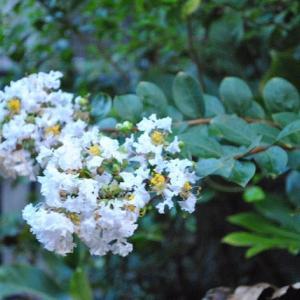 早朝の散歩で谷端川の緑地を花を見ながら散策  3-17