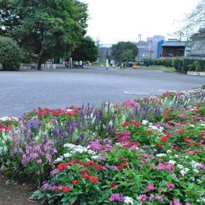朝の散歩で千早フラワー公園の花たち  3-70