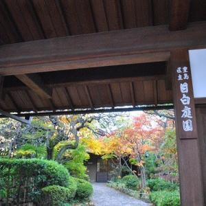 早朝の散歩 目白庭園もみじ楽園  12