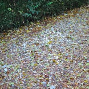 おとめ山公園 弁天池の落葉がきれい