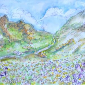 乗鞍岳のお花畑 絵   1