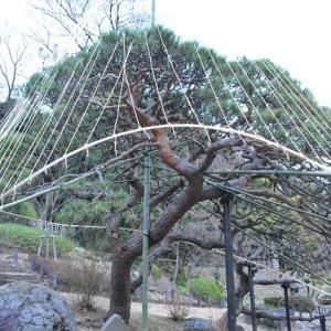 肥後細川庭園の園内景色   5
