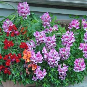 散歩道の花たち 花壇の花たち   4