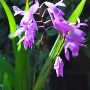 散歩道の花たち ハナミズキの咲き始めの面白い姿  21
